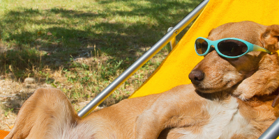 Top 5 Ways for Maryland Pet Parents To Beat the Heat