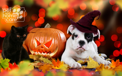The BEST Ways to Celebrate Halloween With Your Pooch!