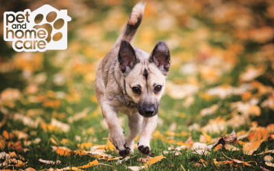The Best Ways to Enjoy Autumn With Your Pup!