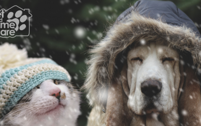 Winter Weather Safety Tips For Your Pets!