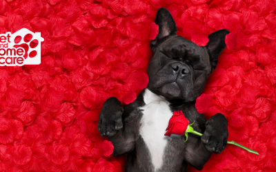 Show Your Pet You Love Them This Valentine's Day