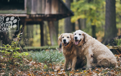 Caring For Your Senior Pet At Home