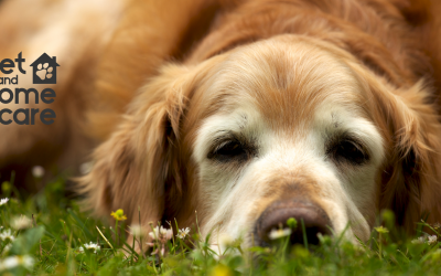 Our Best Secret for Chronic Pet Pain