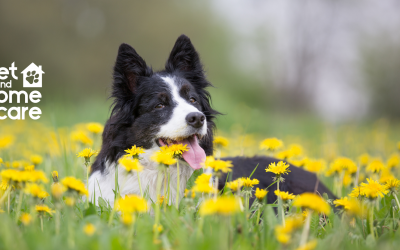 Pet Hazards to Avoid This Spring