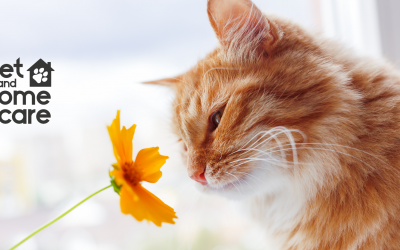 All About Seasonal Pet Allergies
